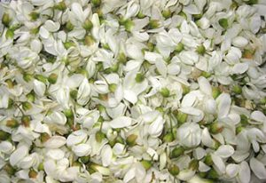 Robinienblüten-Sirup-Herstellung: Einzelne Blüten vor dem Einlegen.